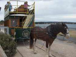 Horse drawn tram at Victor Harbor