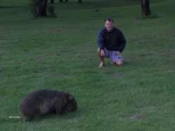 Which is the Wombat?