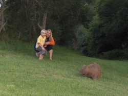 More Wombats